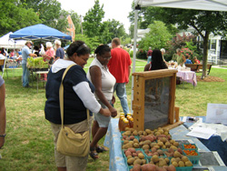 Farmers Market at Berea College Farm