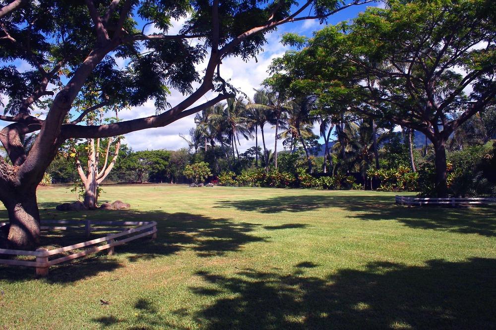 Landscape_Field 2.jpg