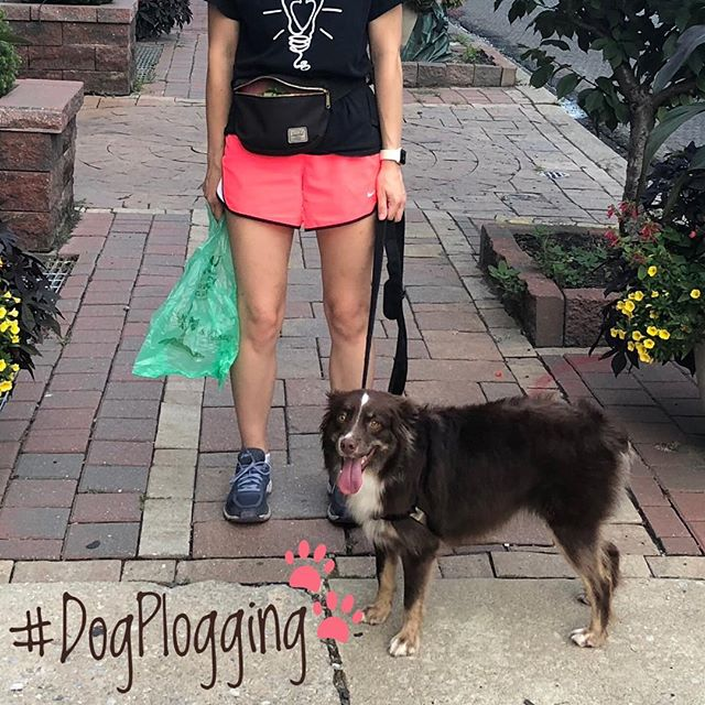 Today's the last day to submit photos for this week's #DogPlogging photo contest & raffle! Get your submissions up tonight to win between $5-$25 in local gift certificates!! 🤗 . . . #segerdogpark #notinphilly #keepphillybeautiful #nonprofit #makeadifference #bethechange #plogging #gogreen #community #joinus #cleanup #unlitterus #whyilovephilly #philly #local #greenlife #eco #volunteer