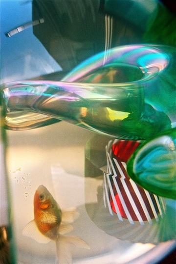 Fish T.jpg