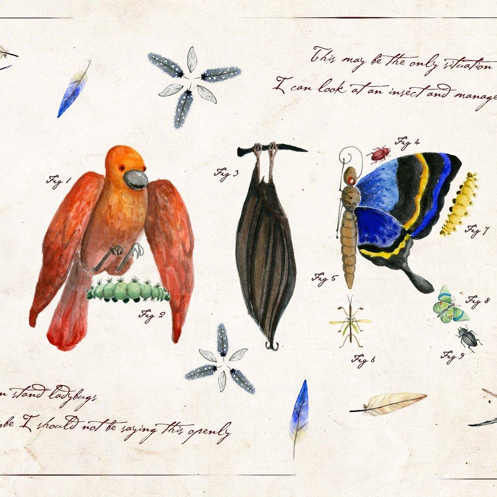 The Collections of Albertus Seba  , July 2016