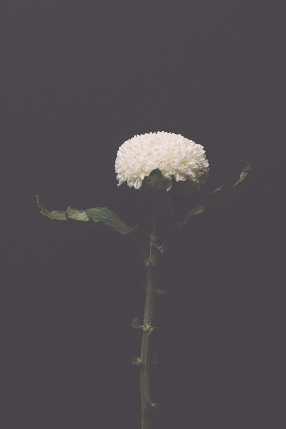 bloom 4.JPG