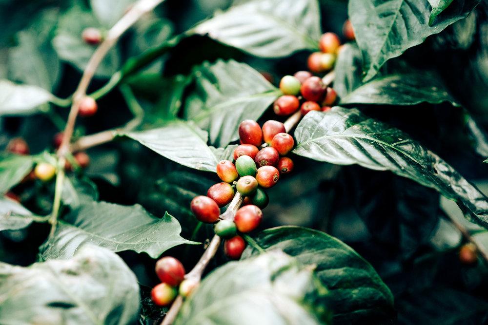 cafe_coffee_day_madhavan_palanisamy_9.jpg