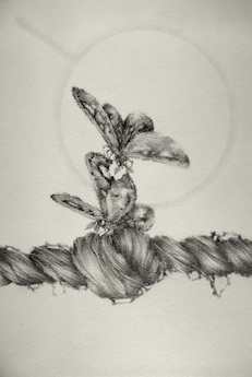 Chapter Fine Focus , 2012, graphite on paper, 6 x 4 inches (unframed), $375. (unframed)