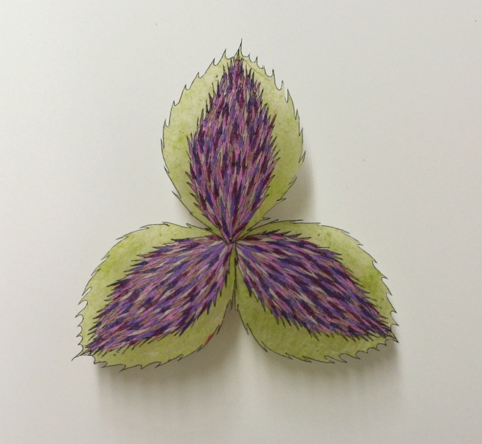 Thistle Trillium , 2015, hand-cut and hand-colored etching on lokta tissue pinned with entymology pins to foam core, 10 x 10 inches, $900. (framed)