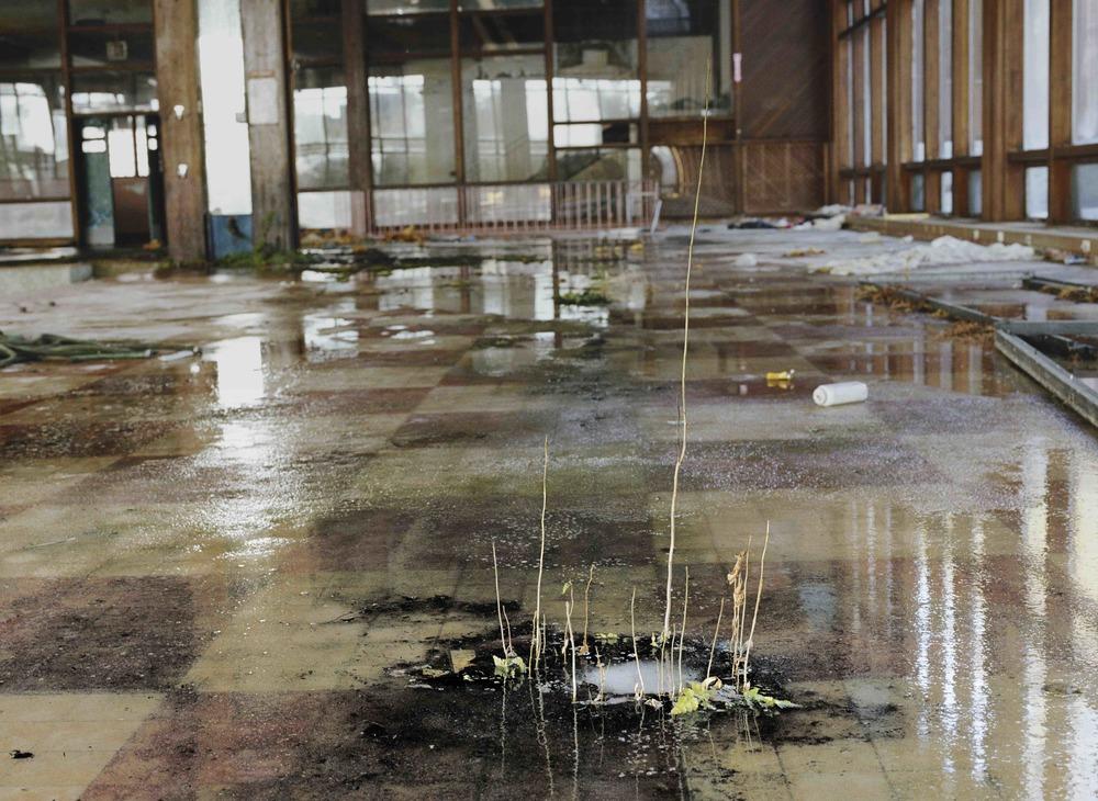 Indoor Pool #2, Grossinger's Catskill Resort and Hotel, Liberty, New York  , 2016,   chromogenic print on Kodak matte paper,   26 x 36 inches, edition 3  /20,   $3000. (unframed), $3500. (framed)    Also available: 16 x 20 inches (unframed), $750. (unframed)