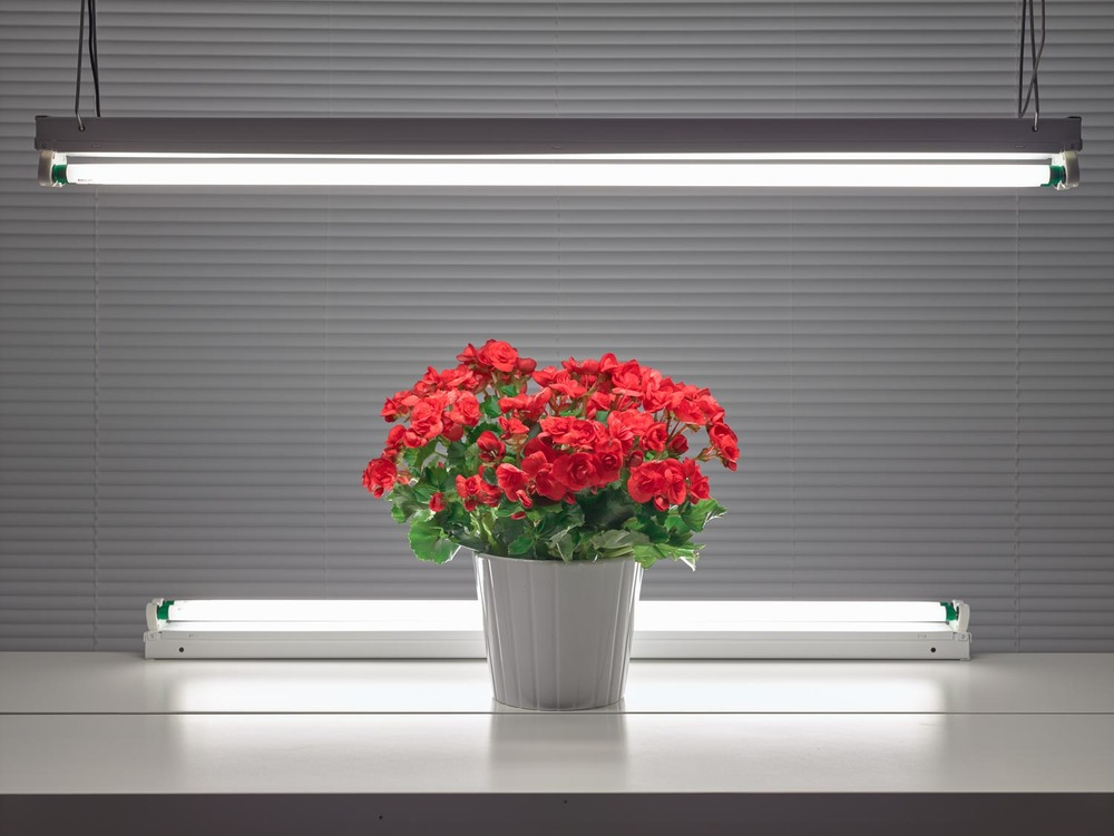 Fluorescent Still Life with Red Begonias  , 2015, archival pigment print, 33 x 42.5 inches, edition of 5, $4500. (framed)