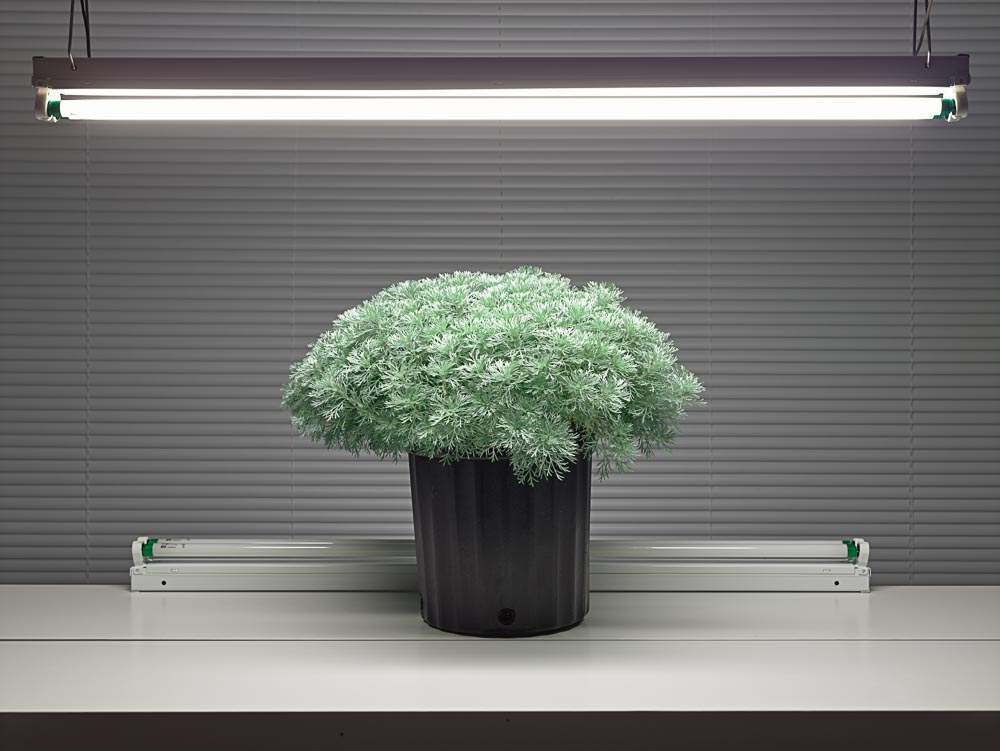 Fluorescent Still Life with Artemisia , 2015, archival pigment print (photograph), edition of 5, 33 x 42.5 inches, $3400. (unframed), $4200. (framed)