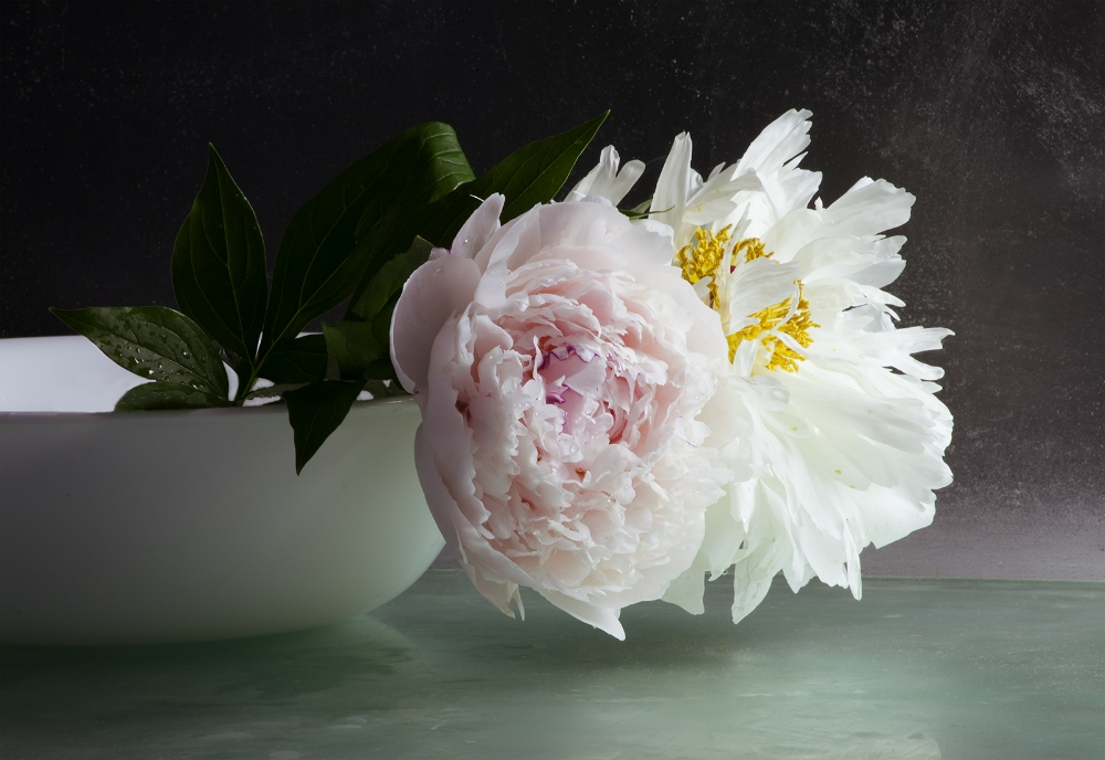 Peonies 7 , 2016, archival pigment print on Epson hot press bright paper mounted on Sintra with UV matte coating, edition 2/10, 26.5 x 38.5 inches, $3500. (unframed), $4000. (framed)