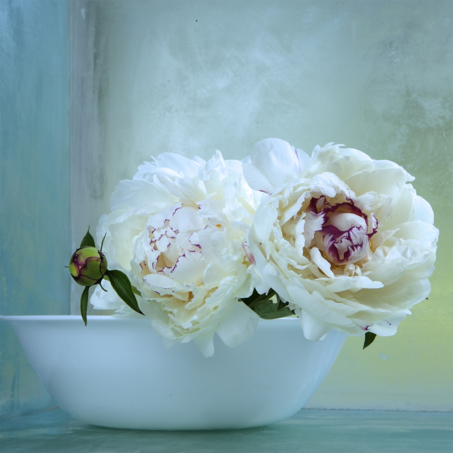 Peonies 9 , 2016, archival pigment print on Epson hot press bright paper, edition 1/10, 32.5 x 32.5 inches, $3500. (unframed)