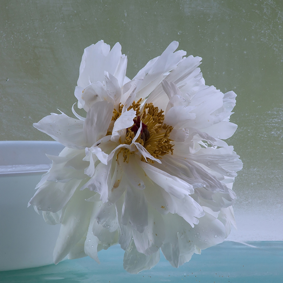 Peonies 8 , 2016, archival pigment print on Epson hot press bright paper, edition of 10, 32.5 x 32.5 inches (unframed), $3500. (unframed), 32.75 x 32.75 inches (framed), $4000. (framed)