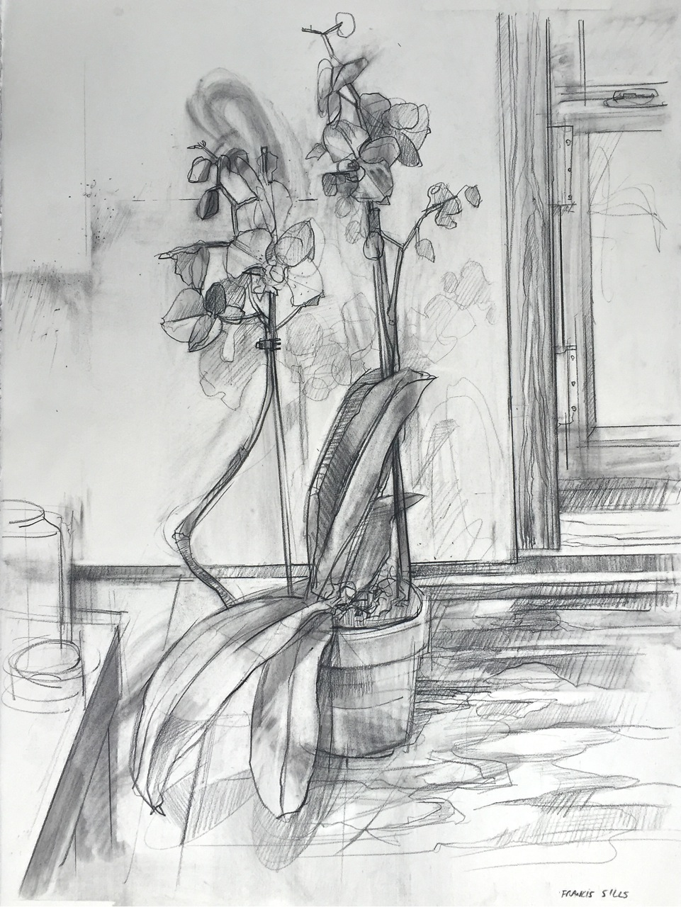 Francis Sills,  Orchid , 2015, charcoal on paper, 34 x 26.50 inches (framed), $1200.