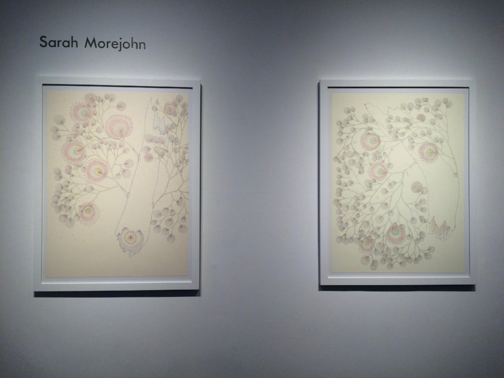 Installation view, drawings by Sarah Morejohn