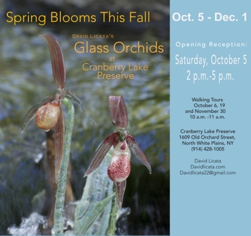 Artist Talk Glass Orchids at Cranberry Lake Preserve Walk and Talk with David Licata  October 5, 2014 Cranberry Lake Preserve Kenise Barnes Fine Art was pleased to support gallery artist, David Licata, as he led walking tours through Cranberry Lake Preserve to show and discuss his glass orchid installations.