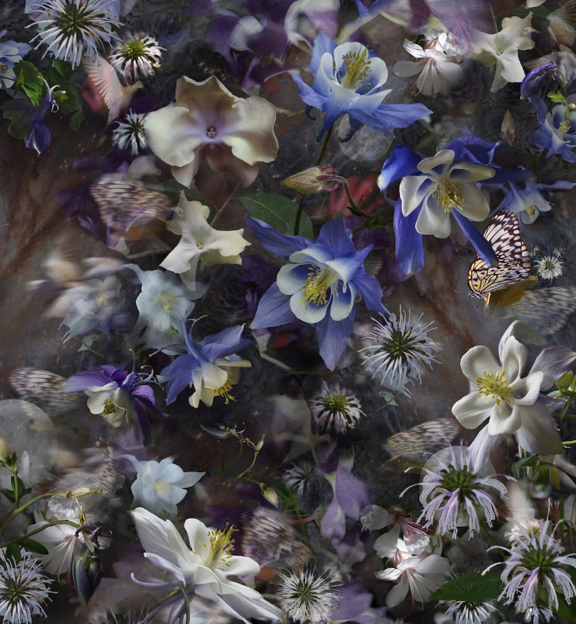 Columbine: The Mystery of Five Doves , 2017, archival pigment print (photograph) on Simply Elegant Gold Fiber Paper 310gsm mounted on Sintra with non-glare plexiglas, edition 2/15, 40 x 37 inches, $2800. (mounted), also available in 34 x 31.5 inches, edition of 30, $1800. (unframed)