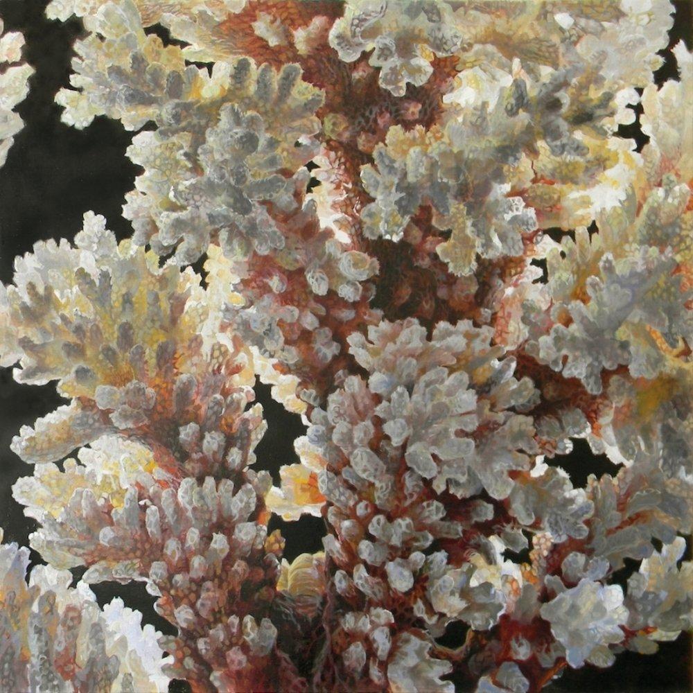 Verrucosa Sanguine , 2018, oil on canvas, 40 x 40 inches, $6500.