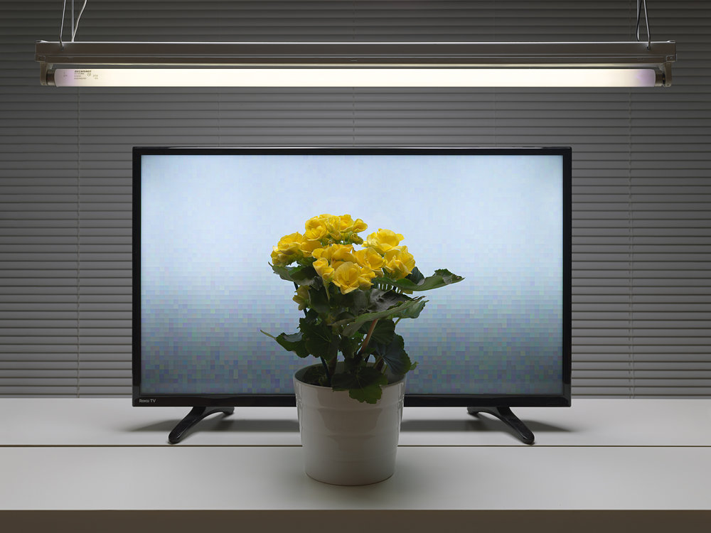 Fluorescent Still Life with TV-Yellow Begonia , 2018, dye sublimation print on aluminum (photograph), edition 1/5, 