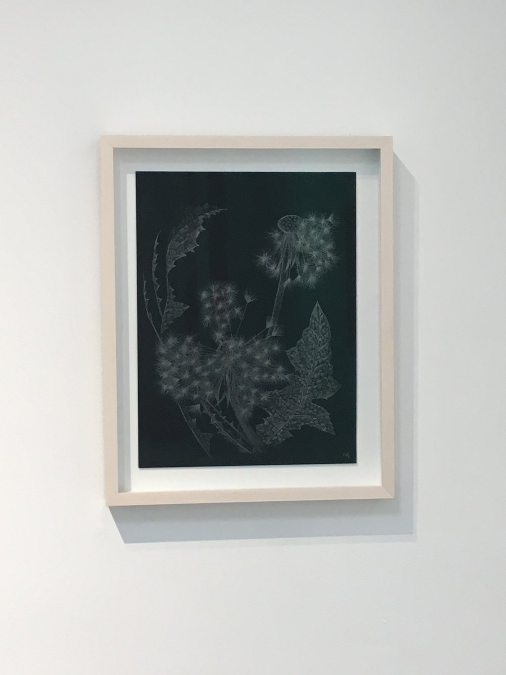 Shouting Flower   goldpoint and graphite drawings by Margot Glass  September 14, 2018 - October 27, 2018