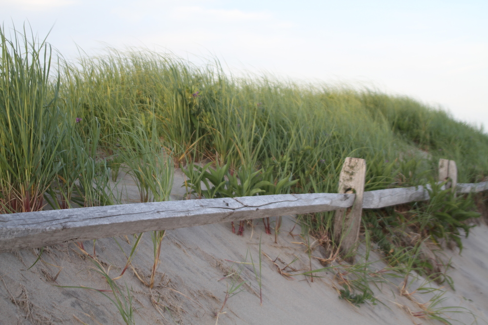 Cape Cod 2013_Fence