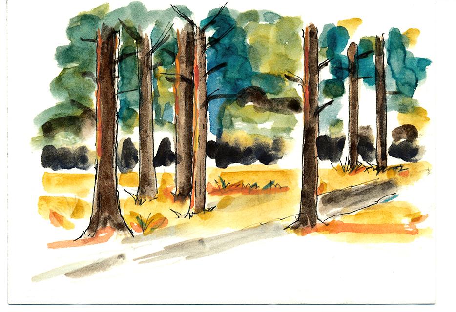Oct5.Trees.jpg
