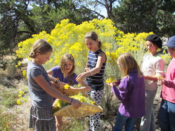 Harvesting | 5th Grade