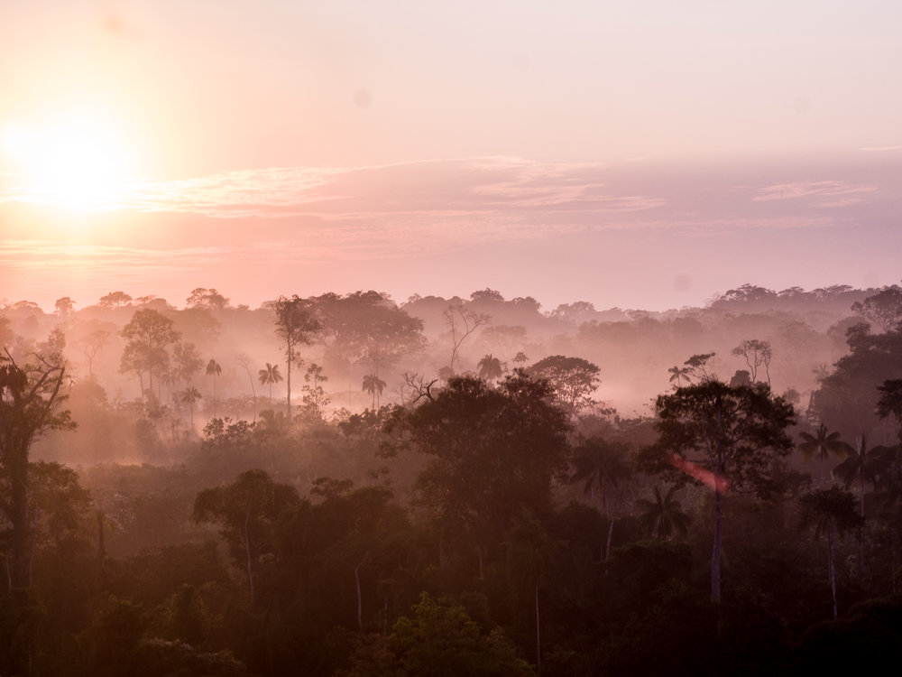 The morning fog starts to disappear as the sun rises in the dry season of July. The non-profit,  Indigenous Celebration , organizes a trip to the Mutum Village to visit the Yawanawá tribe in Acre, Brazil region of the Amazon Jungle.