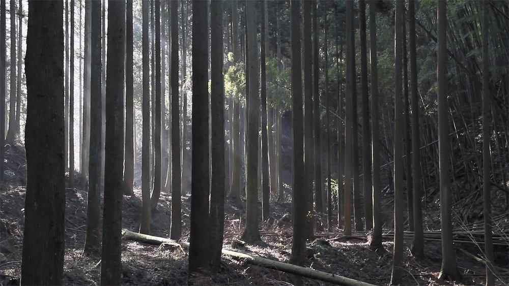 森の木琴002.jpg