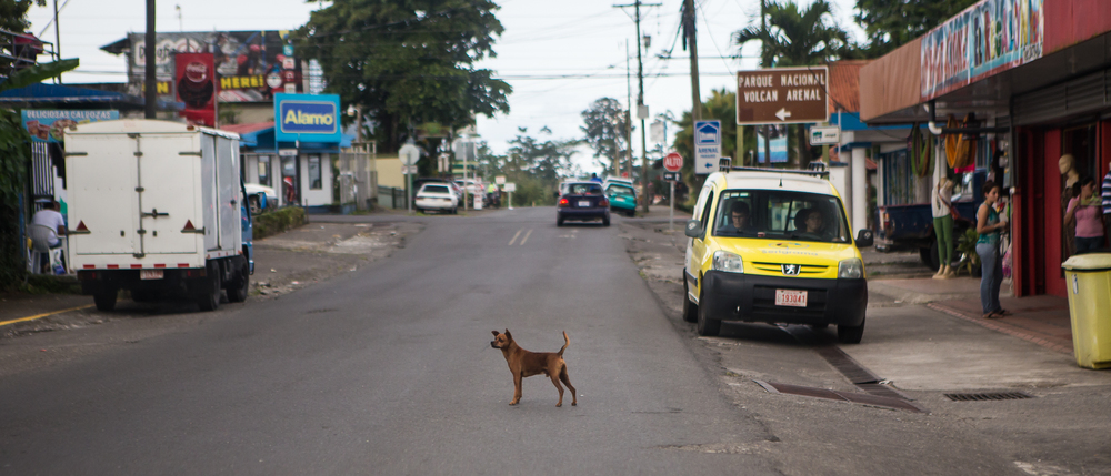 Dogs may out number people in Costa Rica. They were everywhere and mostly in the middle of the road.