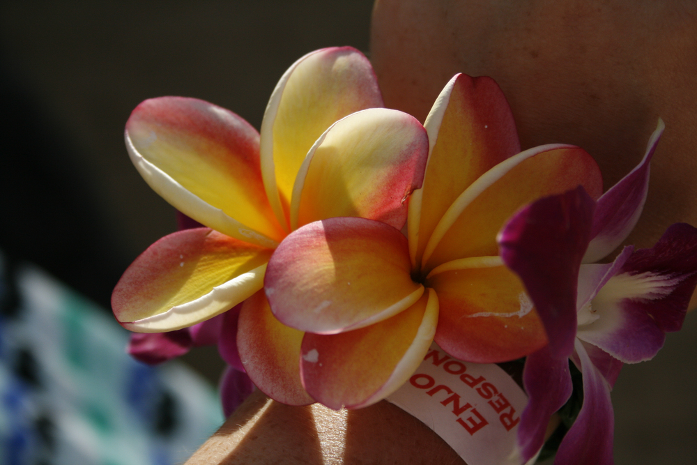 One of the lei fresh flower bracelets that my mother and I made.