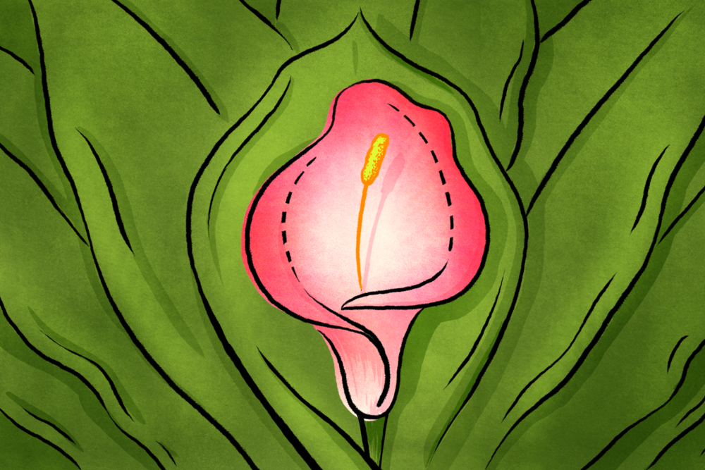 Doctors Warn That Teen Labiaplasty Is On The Rise for Vocativ
