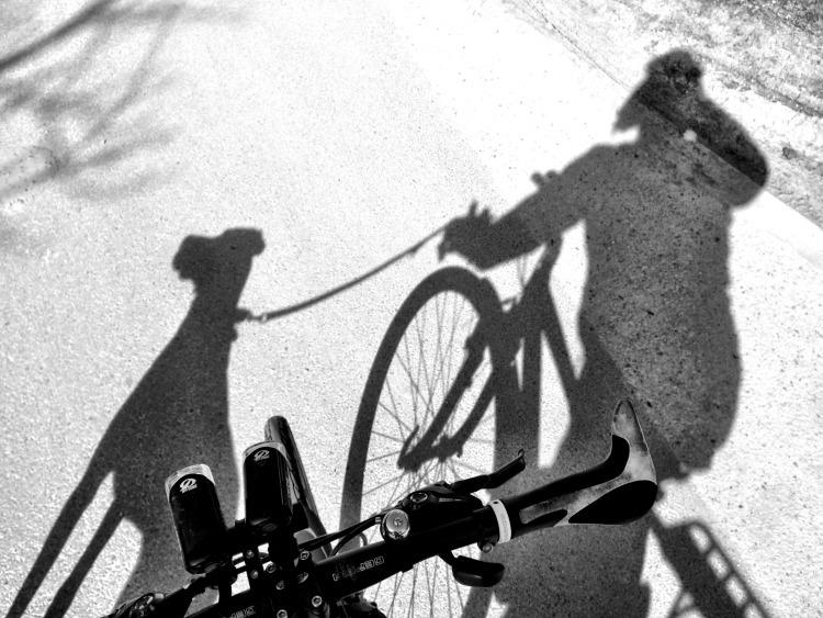 bicajozas.jpg