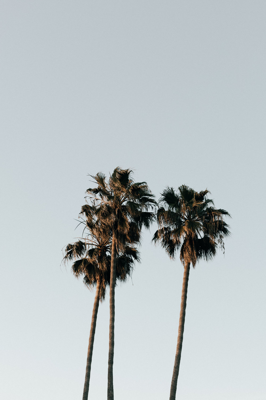 Hailley+Howard_Laguna+Beach_Engagement-4773.jpg
