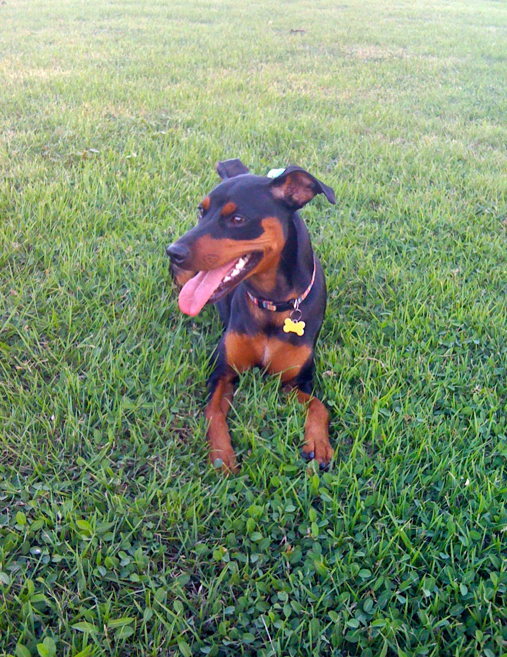 Dog Park - Condado, San Juan, PR