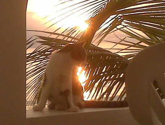 A cat on the ledge of the Coconut Palms inn - Rincon