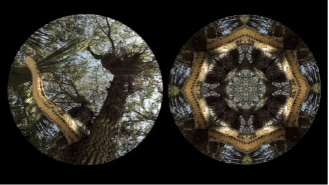Leslie Thornton, Binocular (Python), video still, 2010, HD video loop