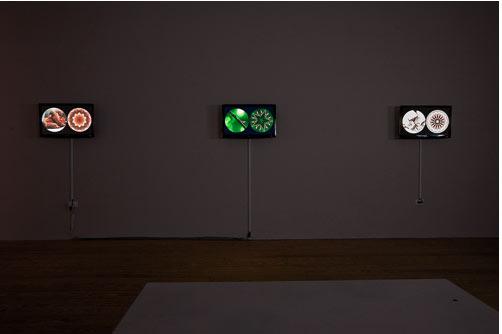 Leslie Thornton, Binocular, installation view. Photograph by Etienne Frossard.