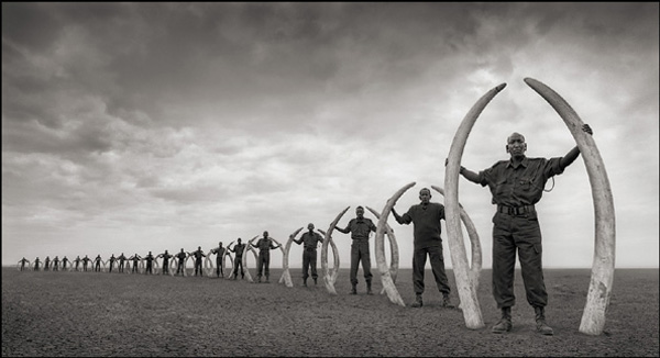 Nick Brandt , Line of Rangers with Tusks of Killed Elephants in Amboseli, 2011 from  Across the Ravaged Land