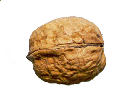 walnut nut.jpg