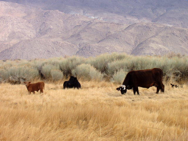 Owens Valley Residents