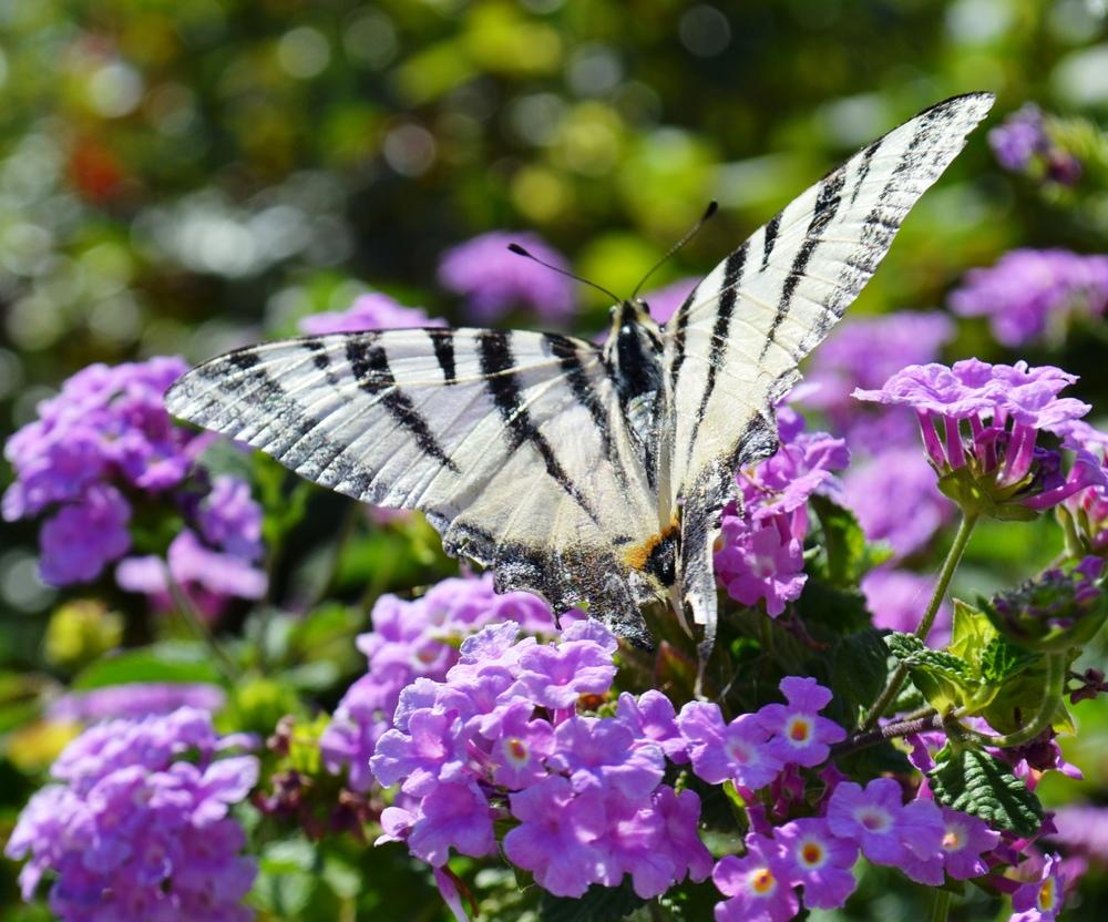 butterfly summer.jpg