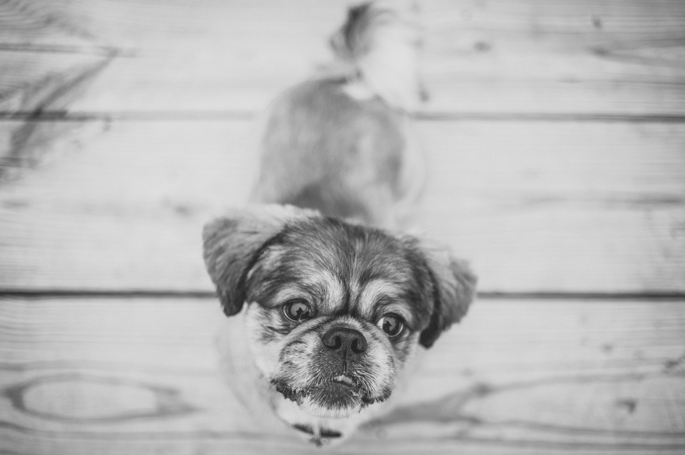 pat-robinson-photography-dog-4.jpg
