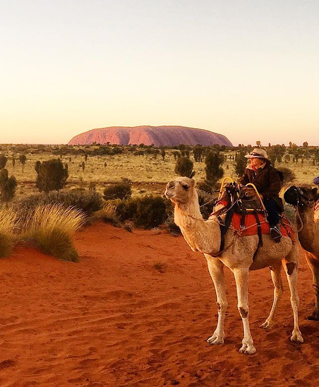 There are over 500,000 wild camels roaming the outback, along with thousands of wild horses and dogs. Most popular sport out here ?  Camel racing ☀️🐫