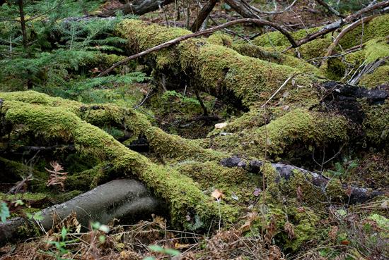 Moss Interweaving