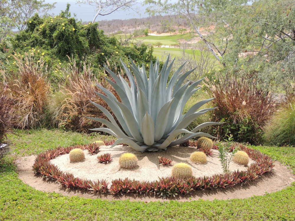 mexican desert landscaping in los cabos