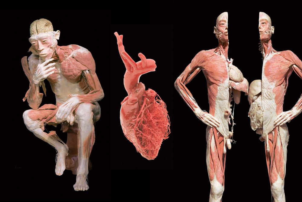 BODIES-1.jpg