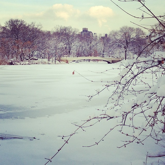 Central Park in Winter, 2014