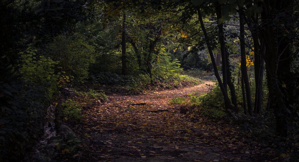 spooky trail.jpeg