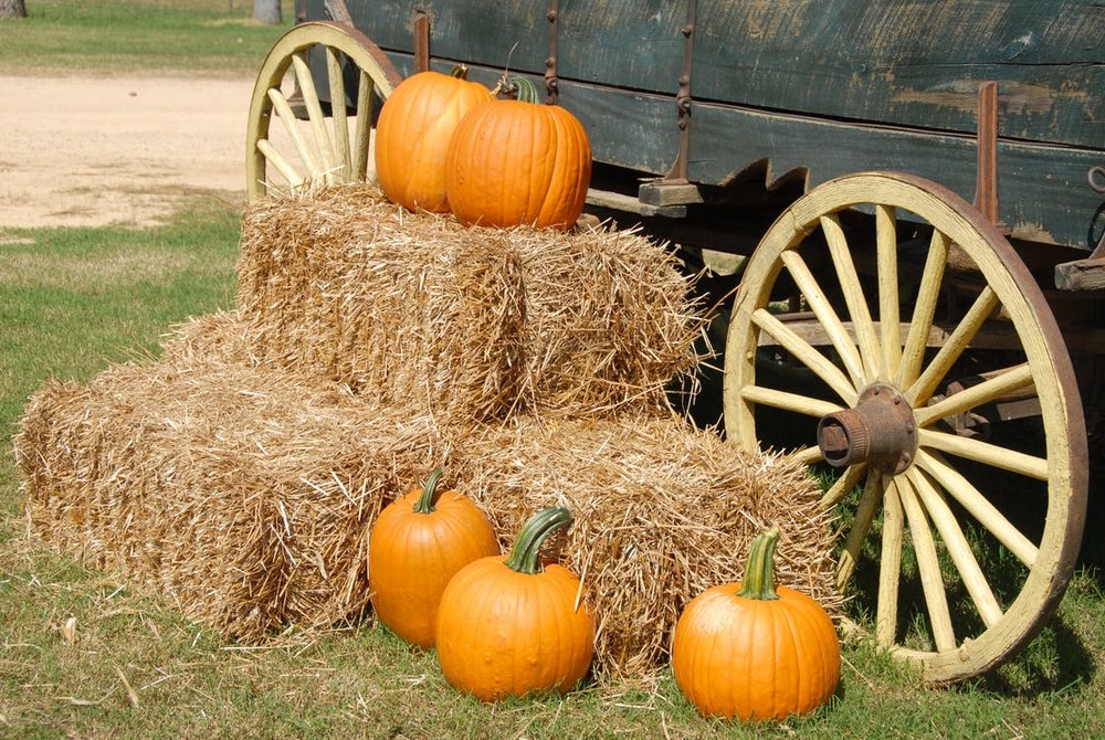 wagon wheel pumpkin.jpeg