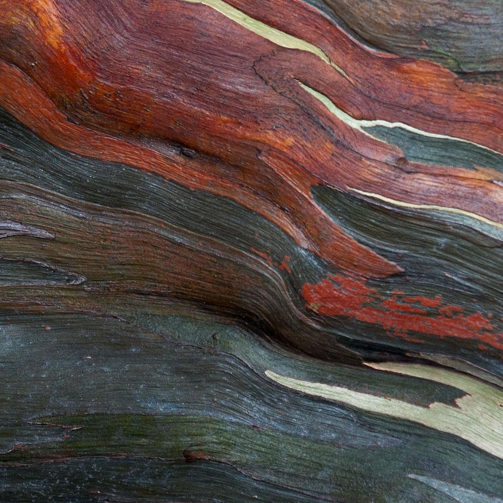 Rainbow Eucalyptus No. 35