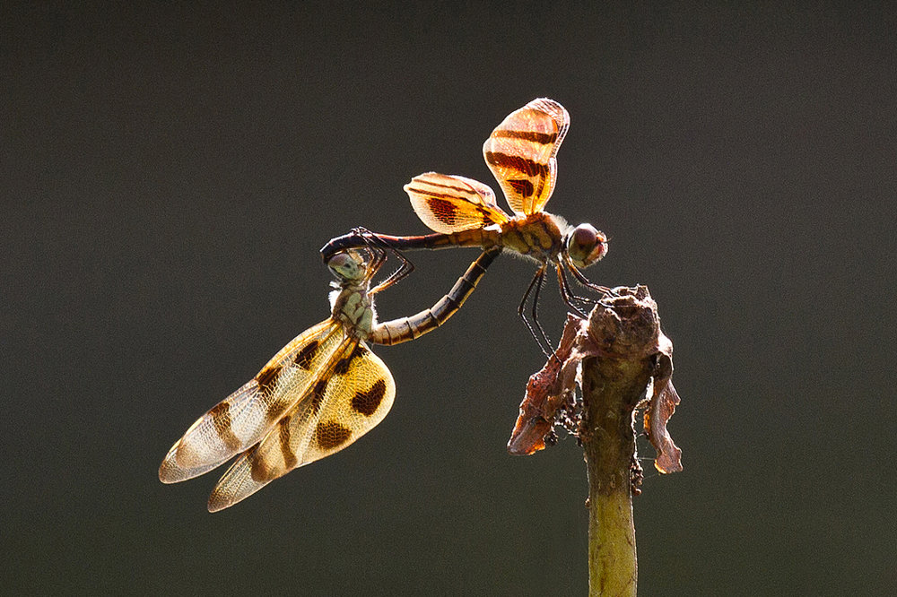 Halloween Pennant Love, Janet Chung, Houston PC, 2nd HM